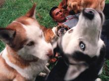 Esto dice la ley colombiana sobre los perros