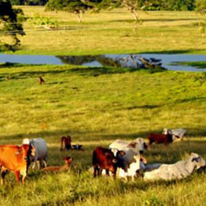 Tierras y ganados