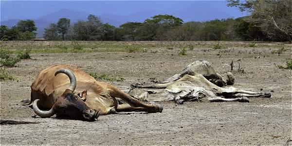 Temporada de sequía en Colombia - Archivo Digital de Noticias de ...