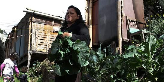 La mujer que hizo de un basurero uno de los mejores jardines de Bogotá