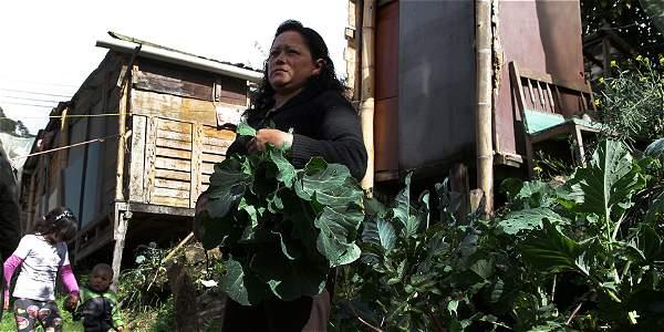Rosa recoge las hortalizas que cultiva en la tierra que produce su sanitario ecológico.