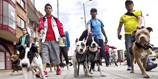 No recoger los excrementos o no poner bozal a perros de razas declaradas peligrosas, son algunas de las causas de las querellas.