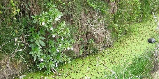 No podrán construir ni cultivar flores en reserva forestal de Bogotá