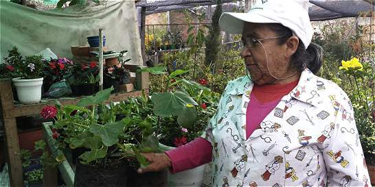 Arboles frutales en cajica cajic for Viveros frutales bogota