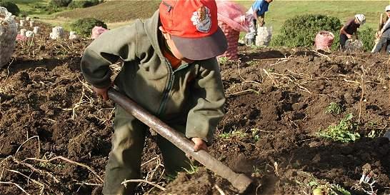 Más de mil niños serían víctimas de trabajo infantil en Cundinamarca