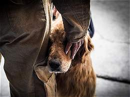 La triste despedida de Jacobo, el perro bombero