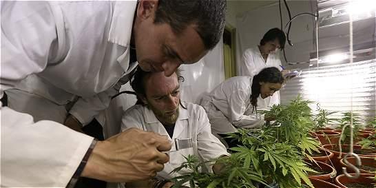 Todavía no hay reglas en Colombia para uso medicinal de la marihuana