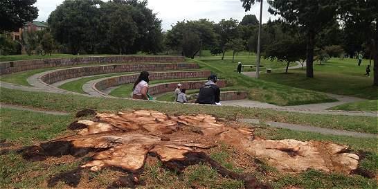 Preocupa la caída de árboles en Cedritos