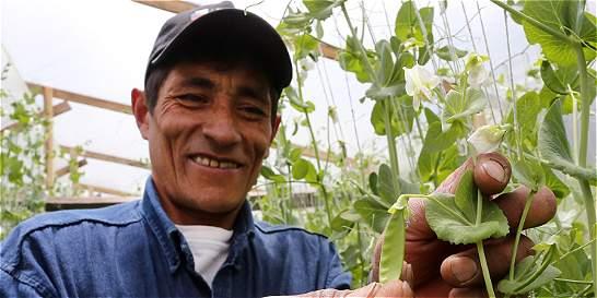 Los campesinos que conquistan a EE. UU. con sus productos agrícolas