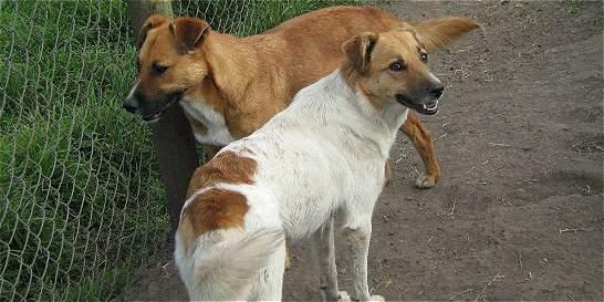 Alguien está matando a los perros rescatados en Subachoque y ... - ElTiempo.com