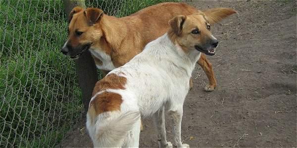 Alguien está matando a los perros rescatados en Subachoque y Zipacón - ElTiempo.com