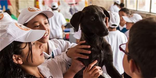Hace nueve años, Ana del Pilar Pachón lidera un club de niños que rehabilitan, acogen y adoptan animales sin hogar. Los niños los bañan, los cepillan y les brindan todo el amor.