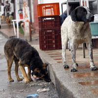 Cerca de un millón de perros viven en las calles de Bogotá
