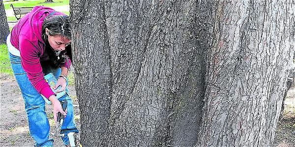 El Jardín Botánico les hace monitoreo a las especies de árboles de la ciudad. La entidad recomienda, en época de calor, no retirar la hojarasca de estos, para que conserven la humedad.