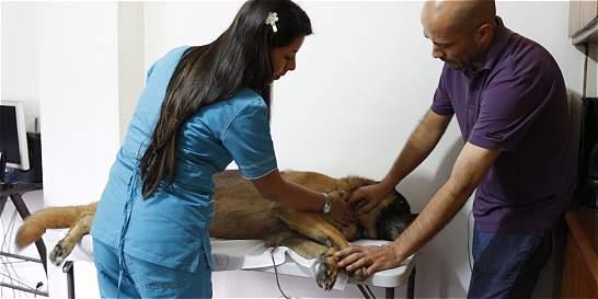 Instituto de Bienestar Animal protegería a 90.000 perros callejeros