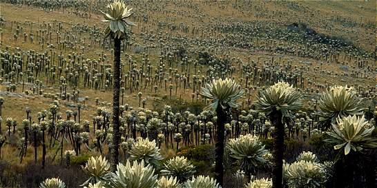 Invierten 800 millones en una ruta ecológica en el Guavio