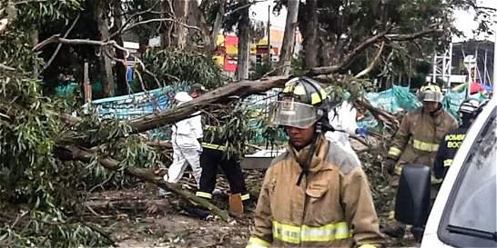 Unos 37.670 árboles en Bogotá tienen más del 50 % de riesgo de caerse
