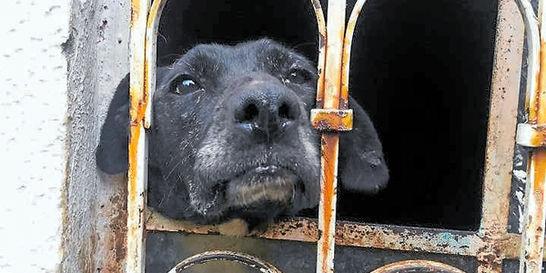 Refugio de animales en Soacha pide ayuda para las mascotas que alberga