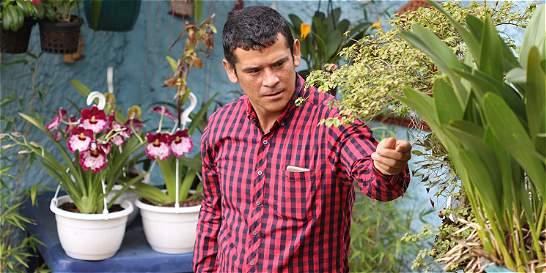 Proyecto busca revivir cultivo de orquídeas nativas en Cundinamarca