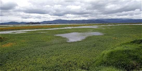 Sedimentos e invasiones, entre los males que vive la laguna de Fúquene