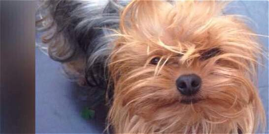 Protesta en el barrio Santa Bárbara por perrita que mataron a patadas