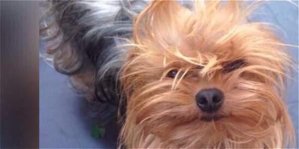 Hombre mató a un perro a patadas y dejó a otro en grave estado de salud