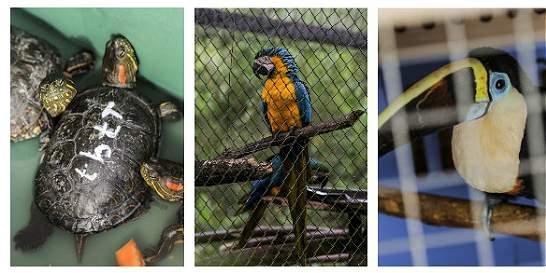 Los rostros del tráfico de la fauna silvestre