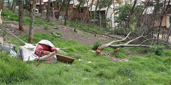 Por viviendas ilegales, personas talaron 70 árboles en Ciudad Bolívar