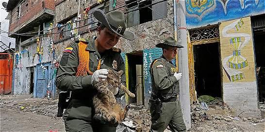 La nueva vida de 'Mona' y otros animales rescatados del 'Bronx'