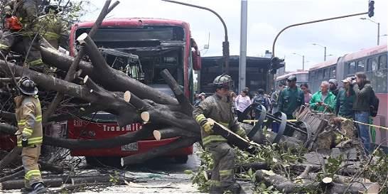 Por fuertes vientos, árbol cayó en vía de TransMilenio