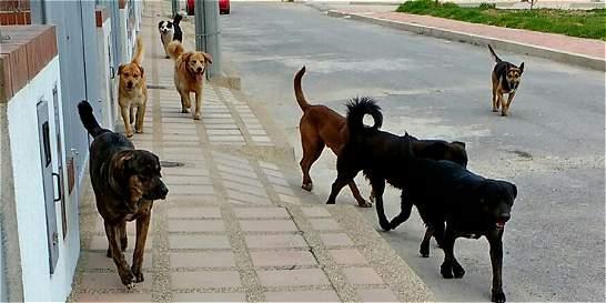 Animales de calle, nuevo enfoque del programa de esterilización