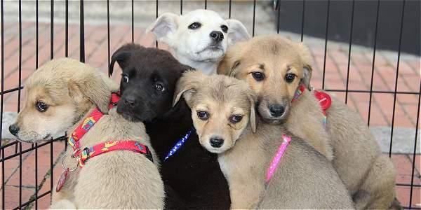 Jornada de adopción en centro Zoonosis
