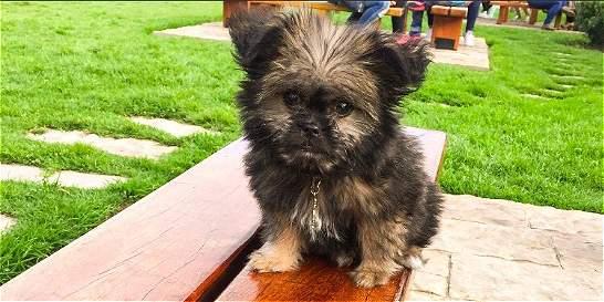 La historia de Draco, el cachorro que murió luego de un baño
