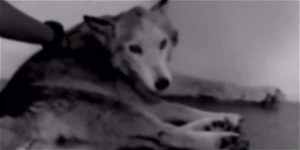 Perro es rescatado por Bomberos en Chapinero