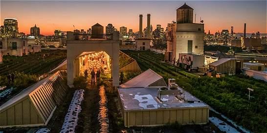 Las huertas que construyeron en los tejados de Nueva York