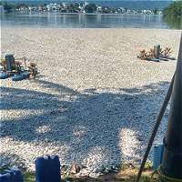 Cientos de peces murieron en un lago artificial, en Girardot