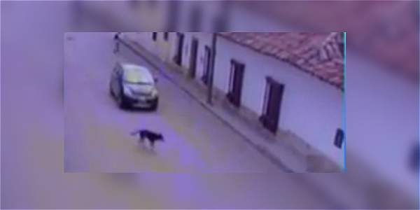 Se busca a este conductor que atropelló sin consideración a una perrita