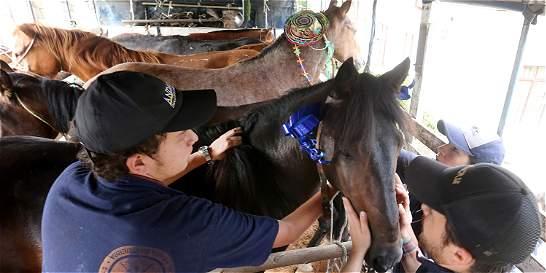 La Universidad Nacional aliviará a 150 caballos que fueron maltratados