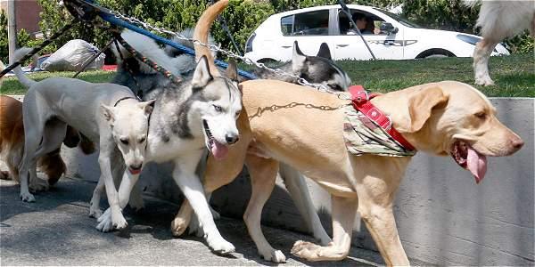 El paseador de perros en Villas del Mediterráneo destacó que lleva seis años trabajando en la zona.