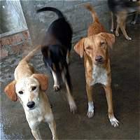 Denuncian envenenamiento masivo de perros en Usme