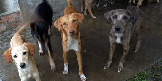 Realizarán necropsia para indagar masiva muerte de perros en Usme