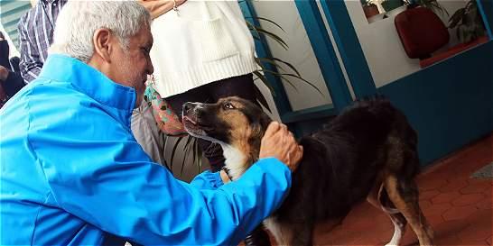 Perros y gatos de Bogotá ya tienen un instituto que los protegerá