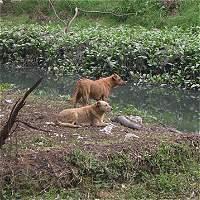 Los ciudadanos que rescatan gatos y perros del humedal Córdoba