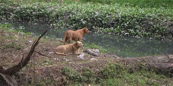 Perros ferales en humedales como el Córdoba pueden ser una amenaza para estos ecosistemas.