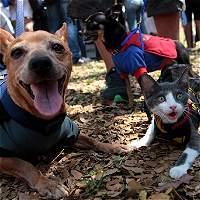 ¿Quiere una mascota? En Bogotá habrá jornada de adopción este sábado