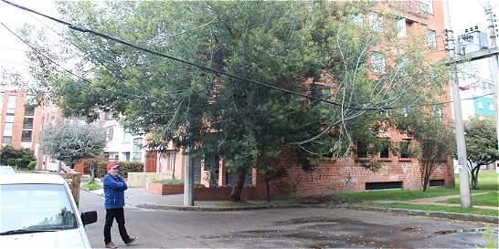 Árbol y poste de luz son una amenaza para vecinos de barrio en Bogotá