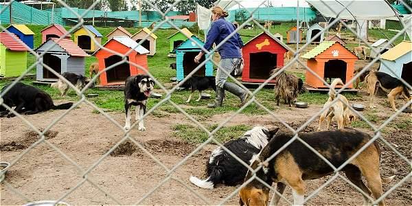 En el lugar hay 320 perros y 30 gatos, tanto de Tabio, Cundinamarca, como de Bogotá.