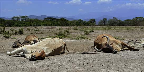 Ganaderos de la Costa Caribe se preparan ante llegada de El Niño
