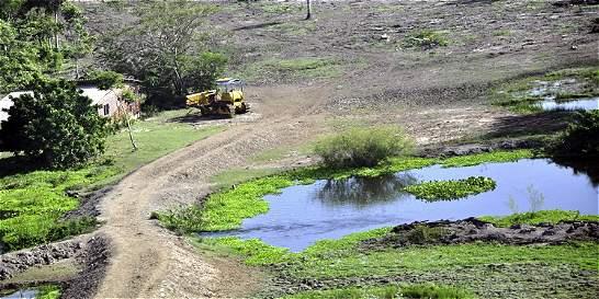 Uso de terrenos para cría de búfalos causa deterioro de Ciénaga Grande