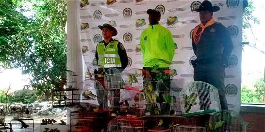Policía investiga venta ilegal de fauna silvestre